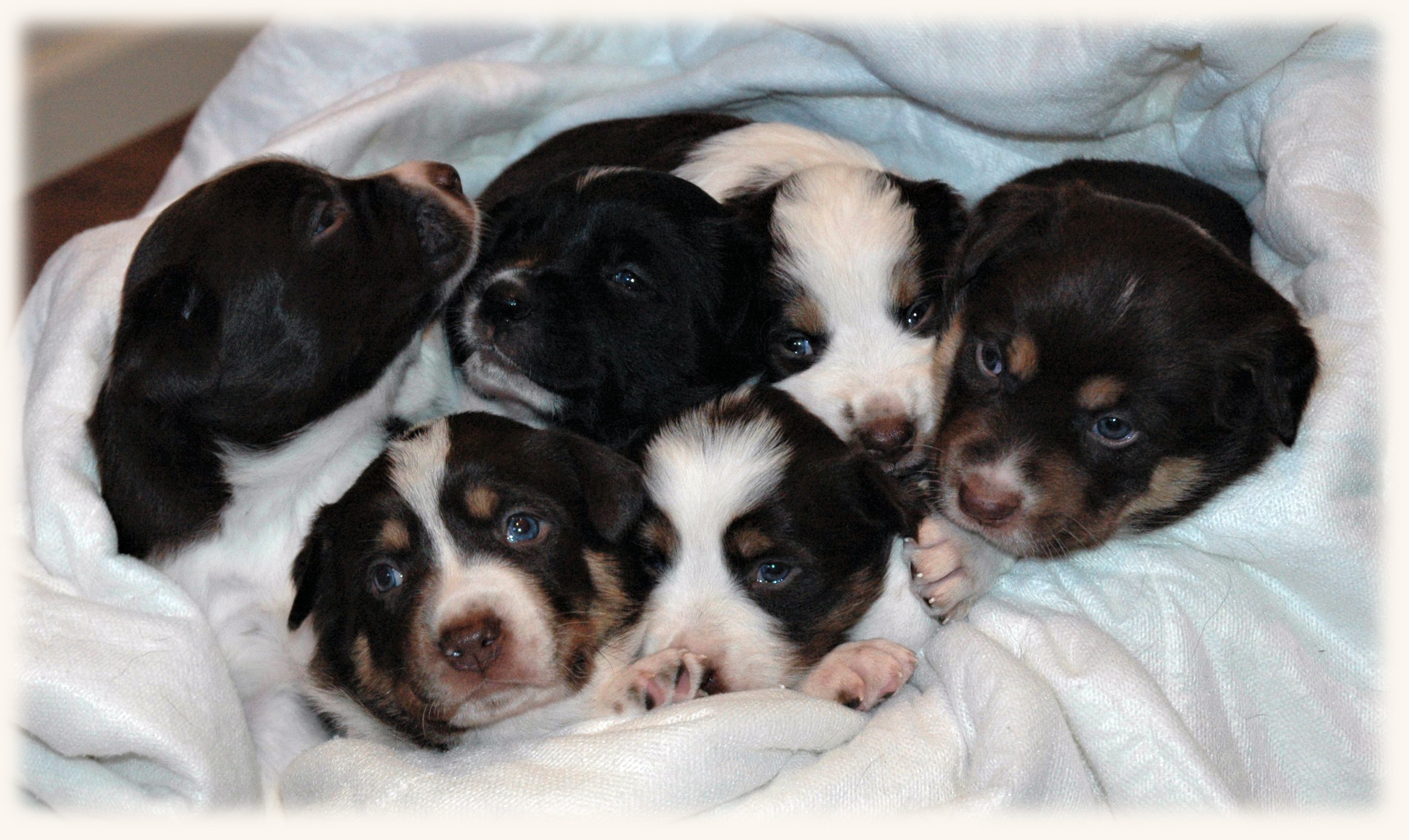 The Litter, 4 Weeks Old