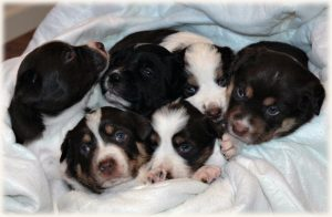 Photo: Full Litter at 3.5 wks