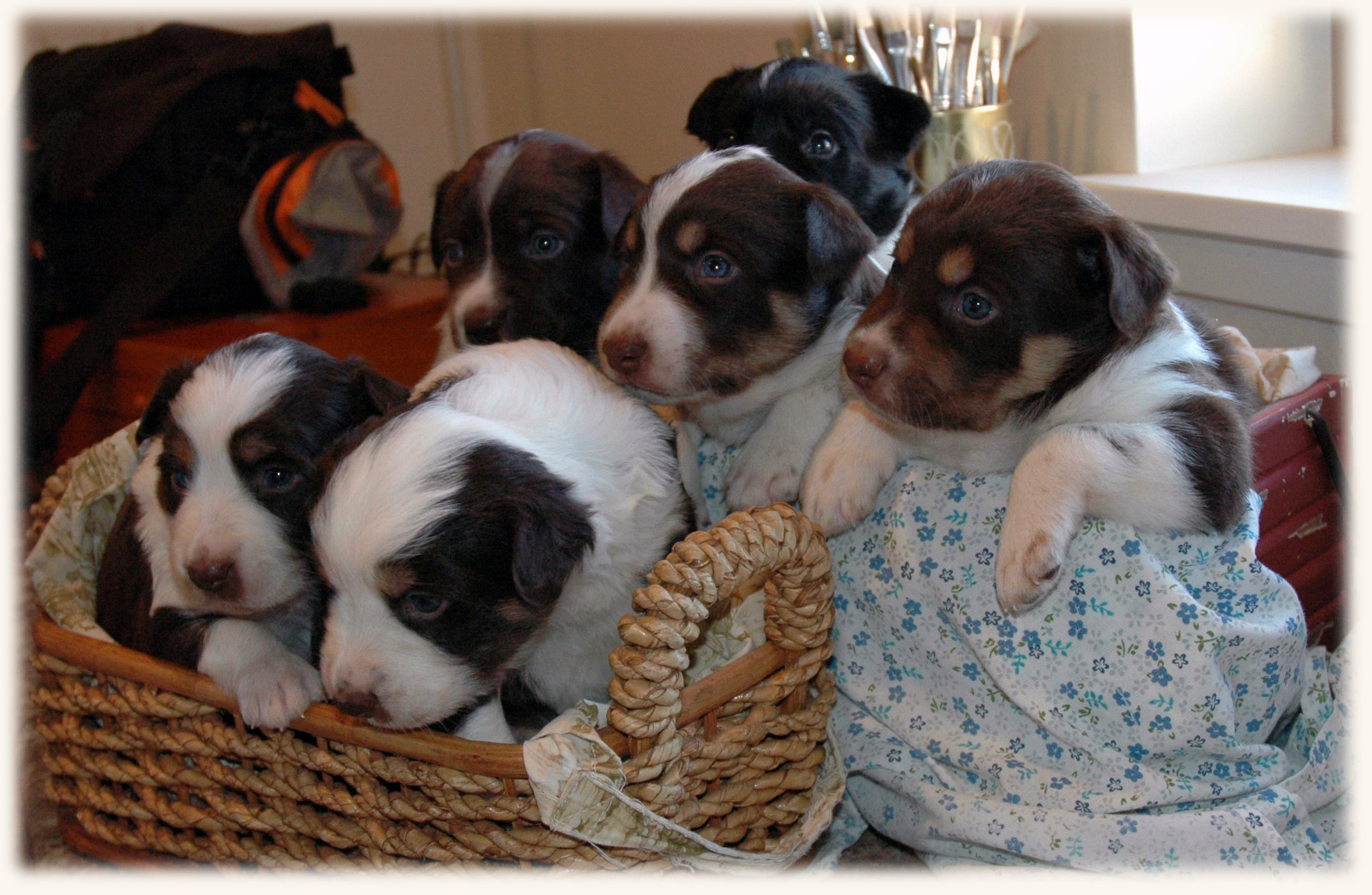 The Litter at 4 Weeks